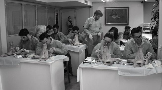 El primer módulo de la VII edición del curso teórico práctico de Manejo de los tejidos blandos alrededor de dientes e implantes.